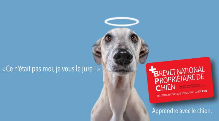 Formation pour les éducateurs canins: Brevet proprietaire de chien, AoA écucation canine