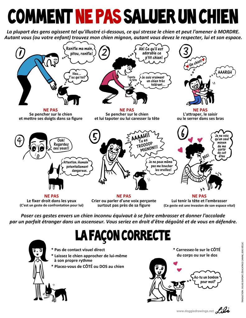 Comment NE PAS saluer un chien - prévention chiens, AoA éducation canine, Genève, Vaud, Valais, Haute Savoie.
