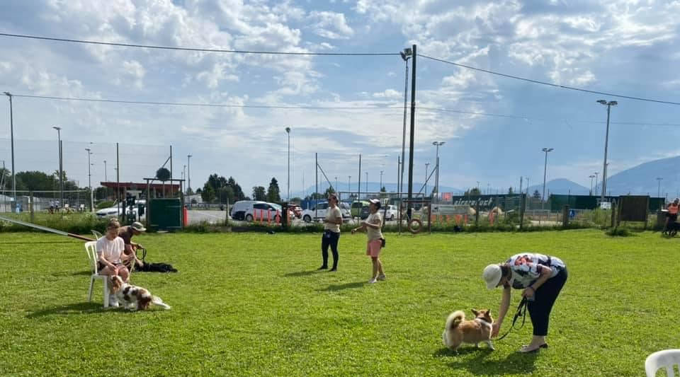 Cours collectifs pour les examens des futurs éducateurs canins