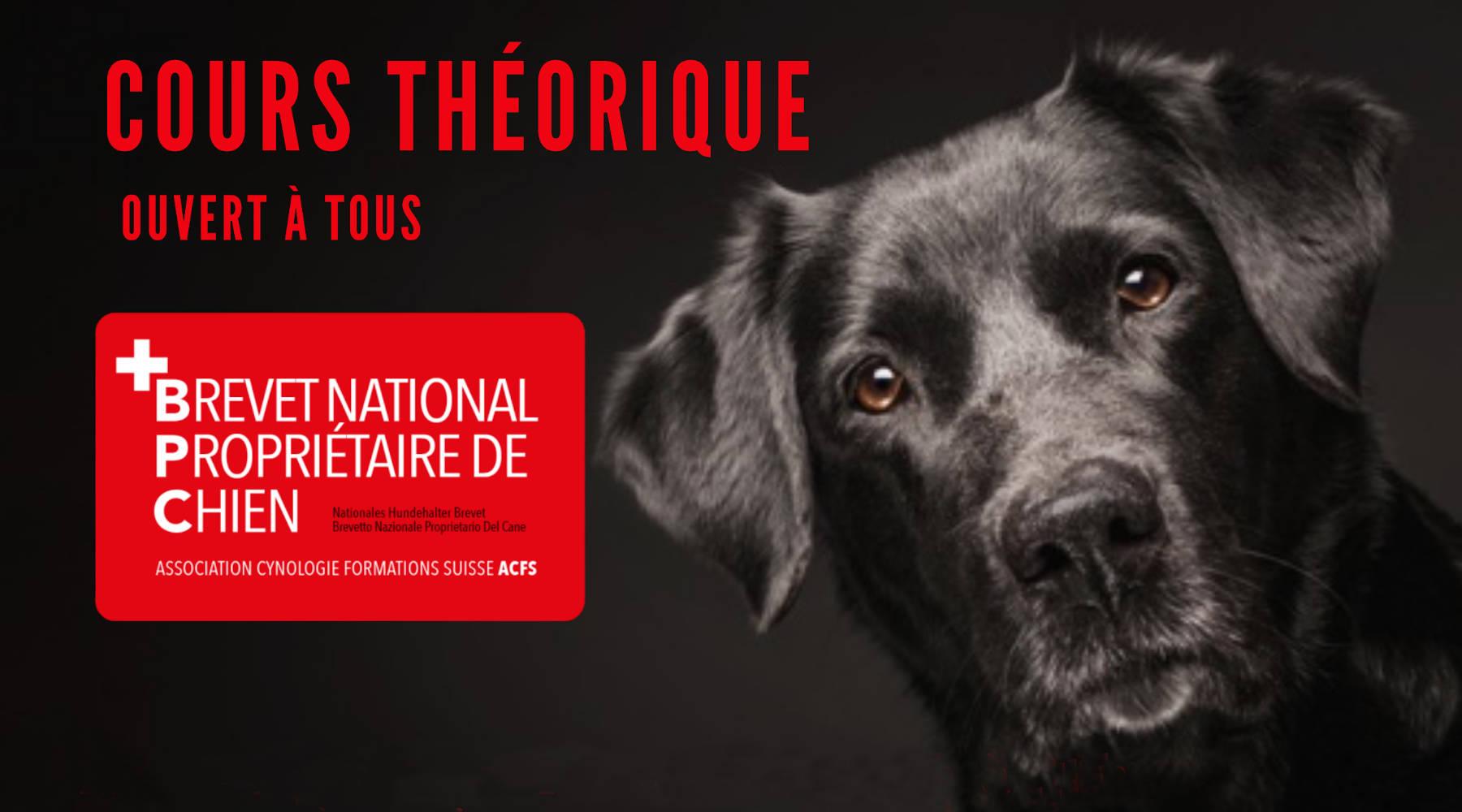 Cours théoriques, brevet national de propriétaire de chien
