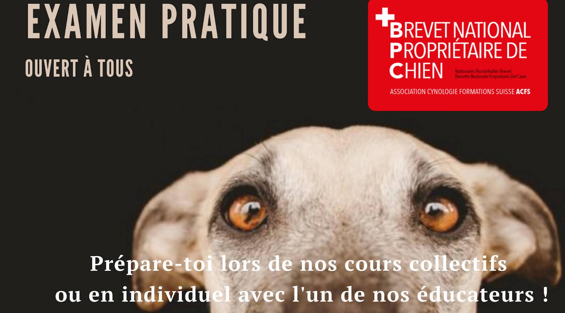 Examen pratique, brevet national de propriétaire de chien