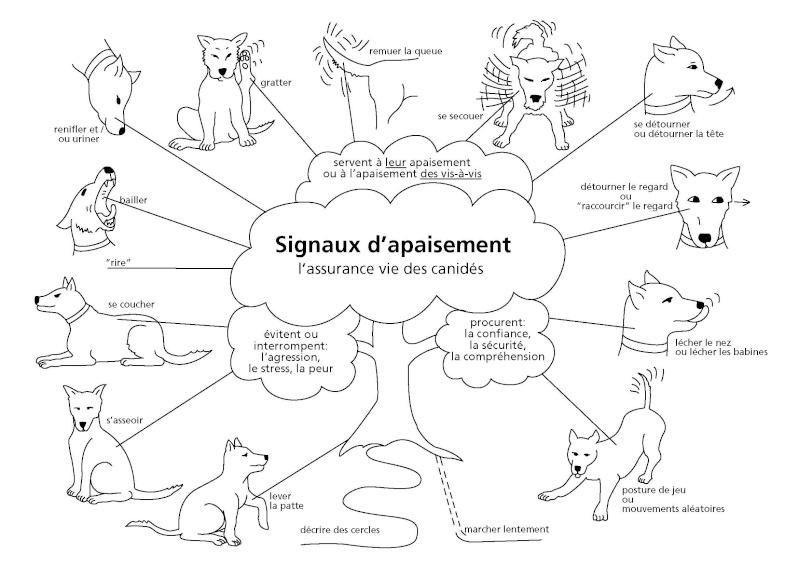 Signaux d'appaisement - Prévention chiens, AoA éducation canine, Genève, Vaud, Valais, Haute Savoie.