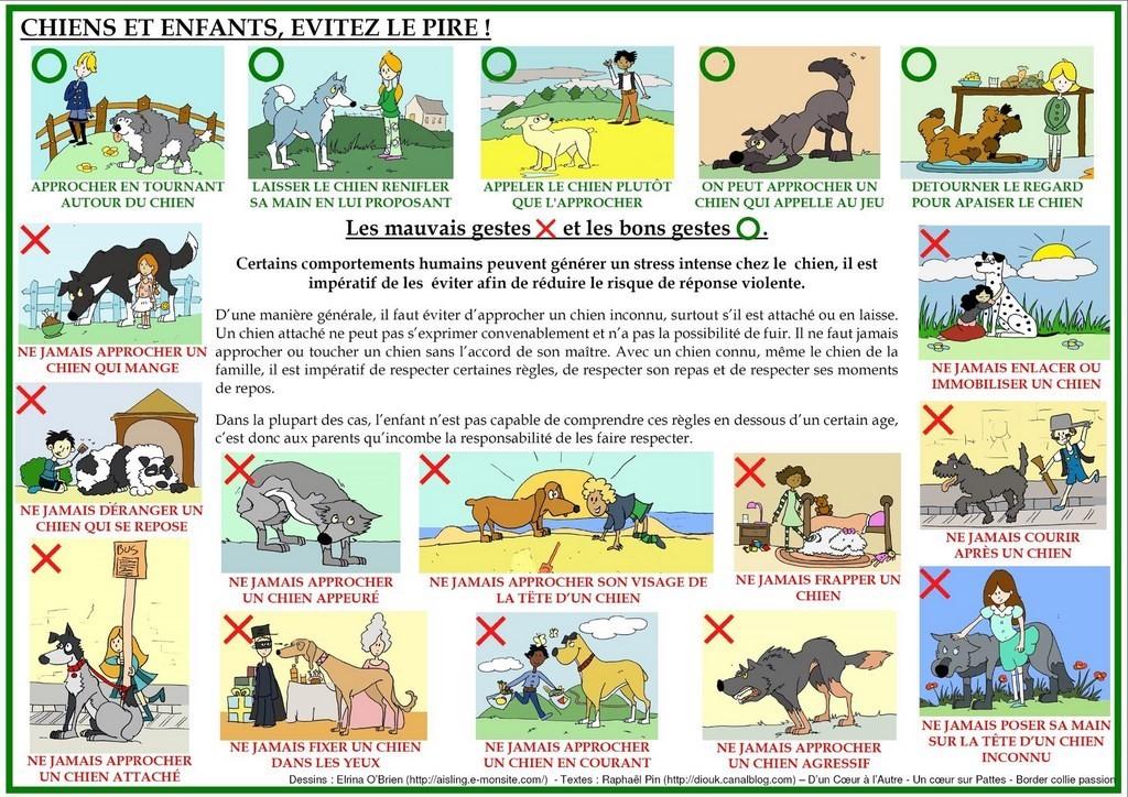 Chiens et enfants - évitez le pire ! Prévention chiens, AoA éducation canine, Genève, Vaud, Valais, Haute Savoie.